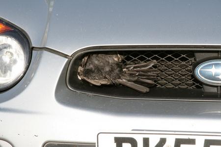 mullered-bird